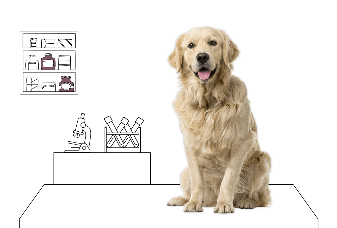veterinary insurance illustration of golden retriever on vet table